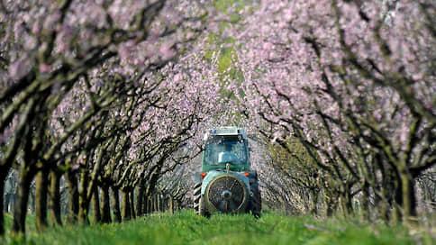 Персики обошлись Bayer и BASF в $265млн  / Американский фермер отсудил у компаний компенсацию за гербицид дикамба