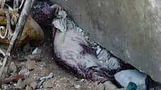 Утром 28 февраля Минобороны России заявило, что попытку наступления на позиции сирийских войск в Идлибе предприняли террористы<br> На фото: тело женщины под завалами в городе Бинниш в провинции Идлиб
