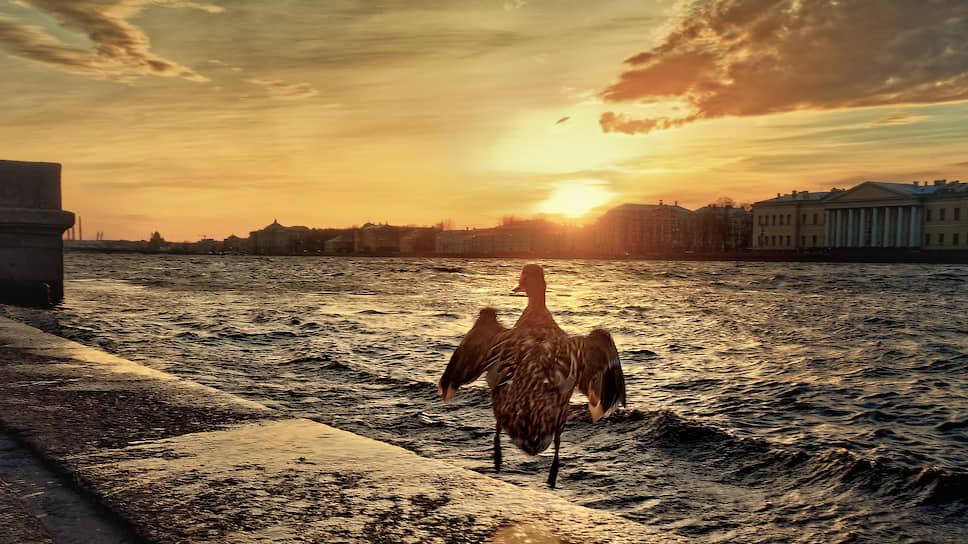 Санкт-Петербург. Птица на набережной Невы