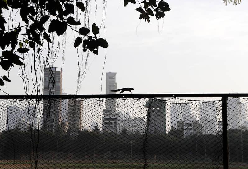 Мумбаи, Индия. Власти города ввели довольно жесткие меры для борьбы с коронавирусом. Это не могло не отразиться на жизни городских животных <br>На фото: белка скачет по забору опустевшего городского парка