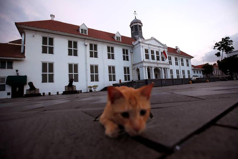 Джакарта, Индонезия. Кошка возле Исторического музея