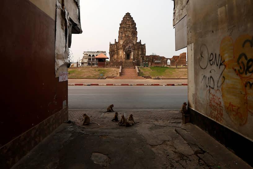 Лопбури, Таиланд. Обезьяны гуляют по опустевшим туристическим объектам, таким как храм Пранг Сам Йод