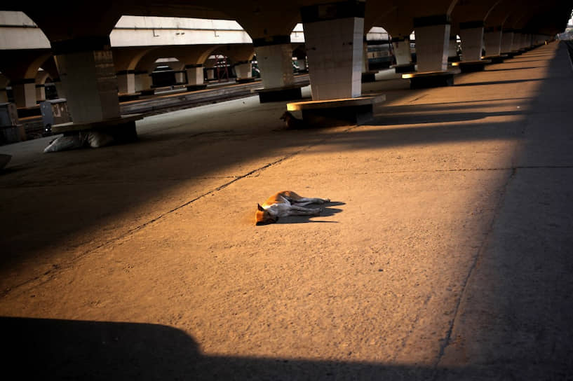Дакка, Бангладеш. Собака спит на железнодорожном вокзале