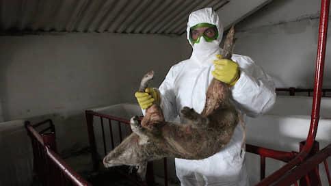 Суд встал на стражу свиноводов  / СГЦ «Вишневский» получил отсрочку уплаты налогов из-за эпидемии