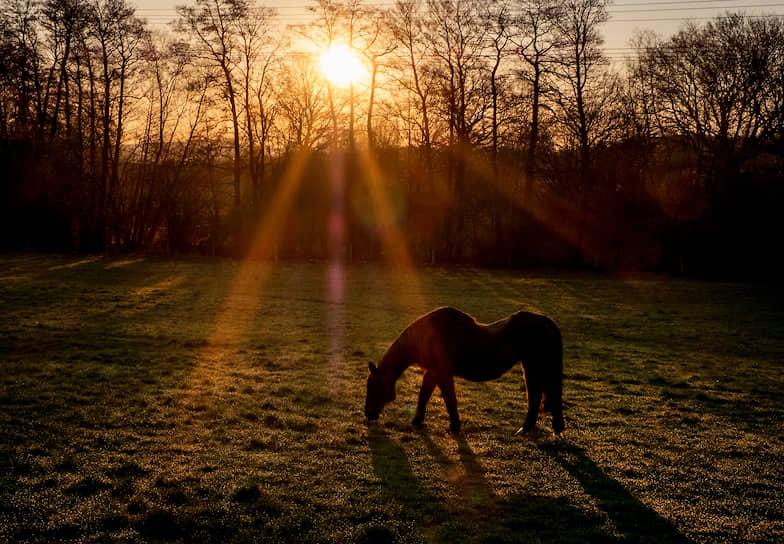 Франкфурт, Германия. Лошадь возле конюшни на рассвете