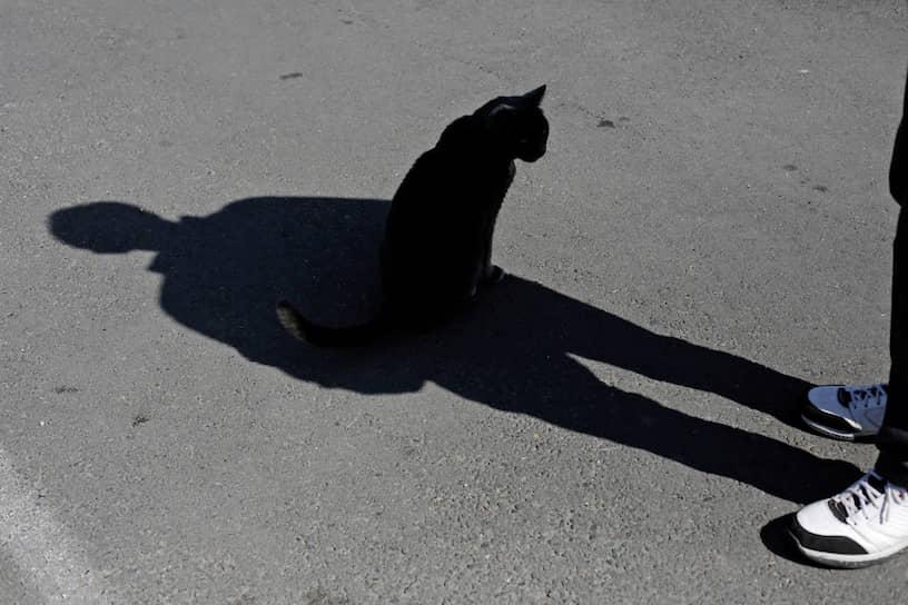 Сиэтл, США. Кот в тени своего хозяина