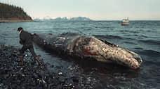 В марте 1989 года танкер компании Exxon Valdez сел на мель у берегов Аляски. В море вылилось около 40 тыс. тонн нефти, было загрязнено 2 тыс. км побережья. Компания потратила $3,8 млрд на очистку местности, компенсации и внесудебные выплаты властям