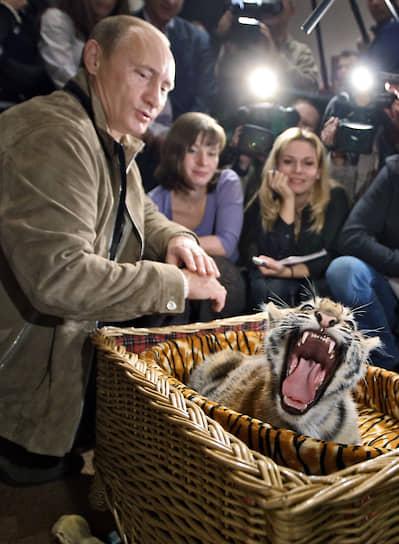10 октября 2008 года. Владимир Путин получил в подарок на день рождения уссурийскую тигрицу