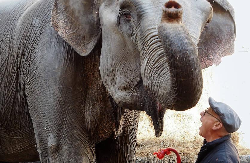 Санкт-Петербург. Дрессировщик во время прогулки со слоном во дворе Большого Санкт-Петербургского государственного цирка