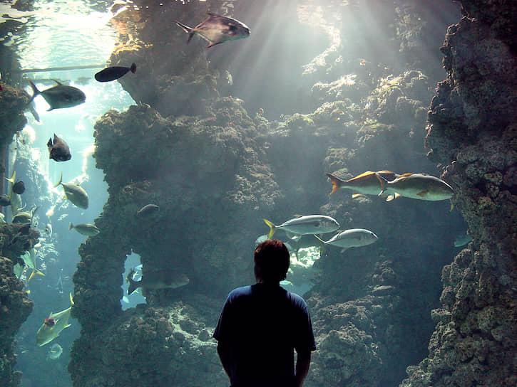 В январе 1996 года «Калипсо», стоявшая в гавани Сингапура, была протаранена другим судном и пошла ко дну. Узнав о случившемся, Кусто впервые в жизни прилюдно заплакал. «Калипсо» подняли и переправили в Марсель, но выйти в море на ней Жак-Иву уже было не суждено. Кусто умер во сне 25 июня 1997 года<br> На фото: Музей океанографии имени Жака-Ива Кусто в Монако