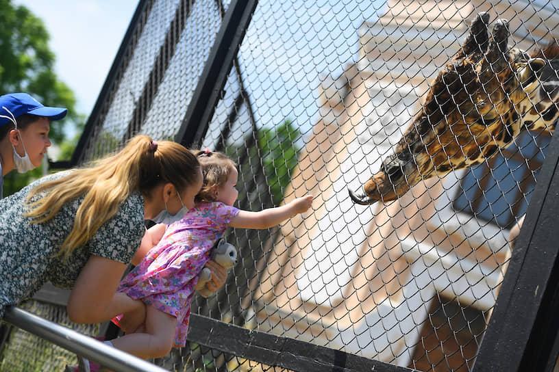 Москва. Мама с ребенком кормят жирафа в зоопарке