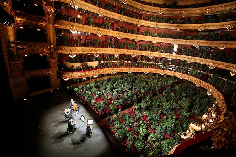 Барселона, Испания. Горшки с растениями на зрительских местах во время репетиции концерта