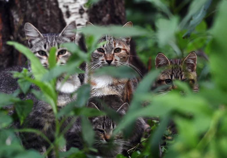 Москва. Кошки в траве