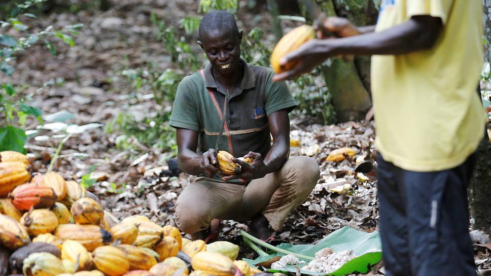 На протяжении большей части истории независимого Кот-д`Ивуара эта страна является мировым лидером по производству какао