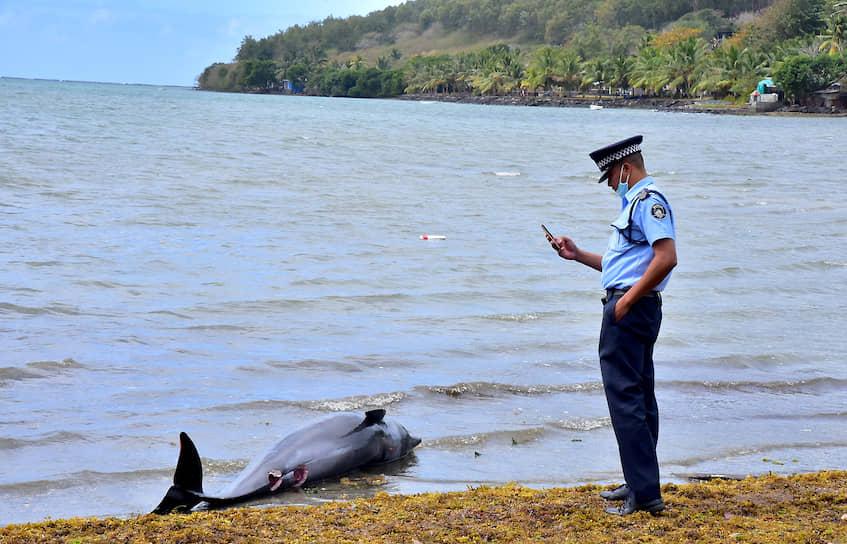 Гранд Сейбл, Маврикий. Полицейский фотографирует погибшего дельфина