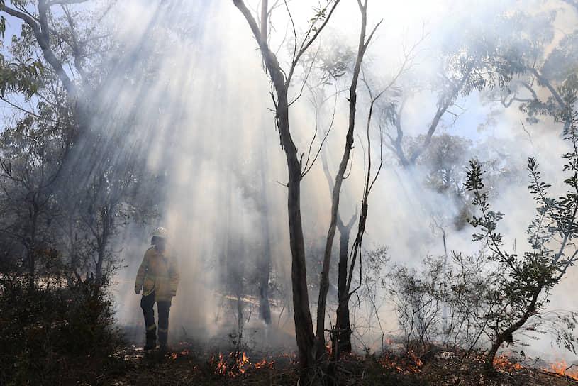 Сидней, Австралия. Пожарный в лесу