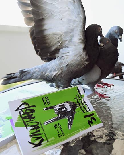 12 сентября. Сочи. Голуби рядом с каталогом XXXI кинофестиваля «Кинотавр»