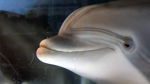 Дельфинов и косаток заменят роботы