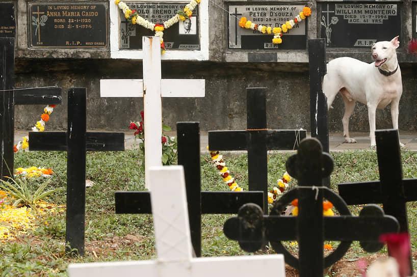 Мумбаи, Индия. Собака на кладбище