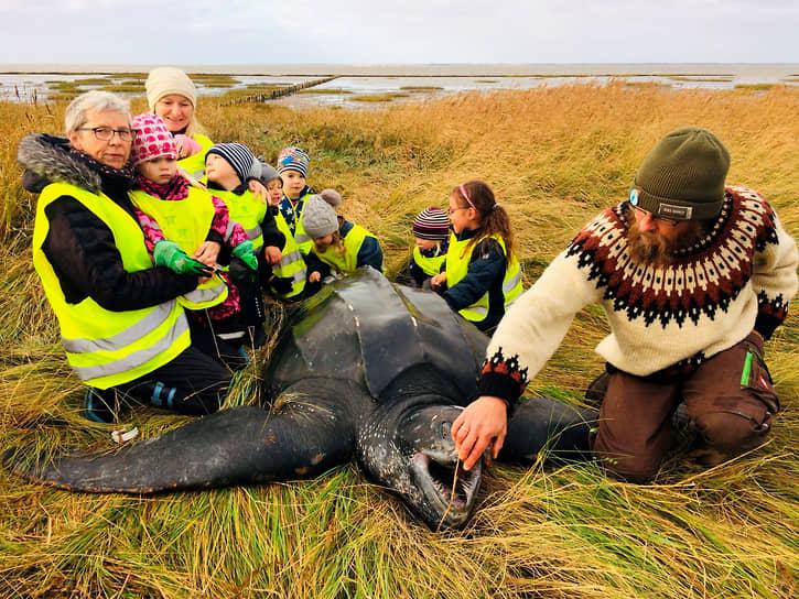 Южная Ютландия, Дания. Черепаха на берегу моря