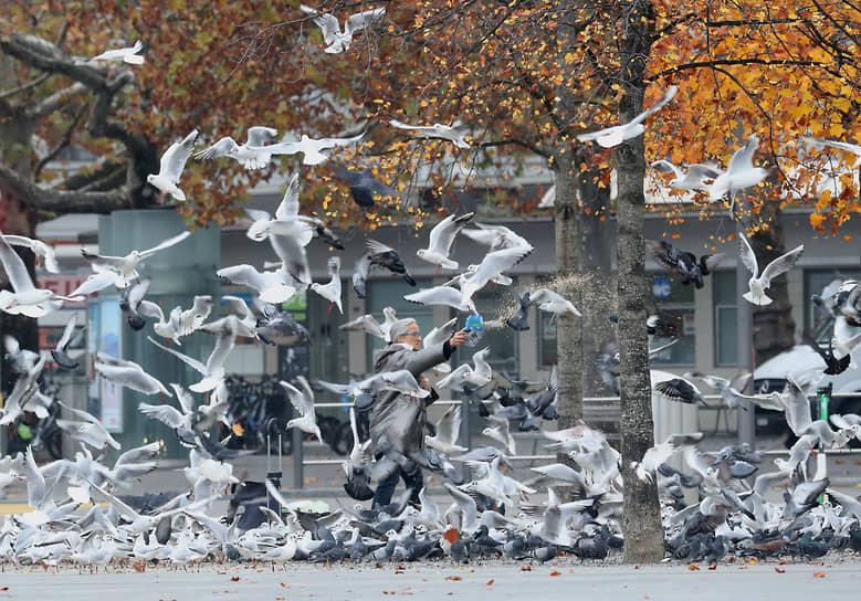 Цюрих, Швейцария. Женщина кормит птиц на площади