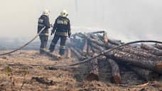 Лесной пожар начался с кражи