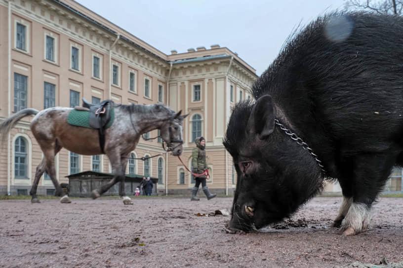 24 ноября. Санкт-Петербург. Виды города