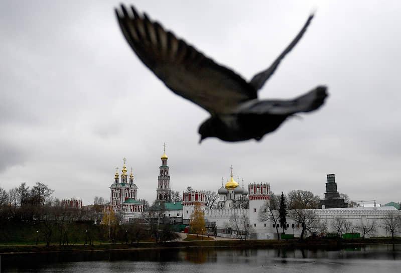 16 ноября. Москва. Голубь на фоне Богородице-Смоленского Новодевичьего женского монастыря
