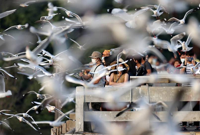 Бангкок, Таиланд. Люди наблюдают за чайками на морском курорте