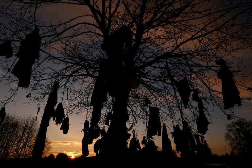 Аснон, Франция. Дерево, на которое люди вешают одежду в соответствии с кельтскими традициями