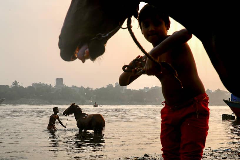 Дакка, Бангладеш. Купание лошадей в реке