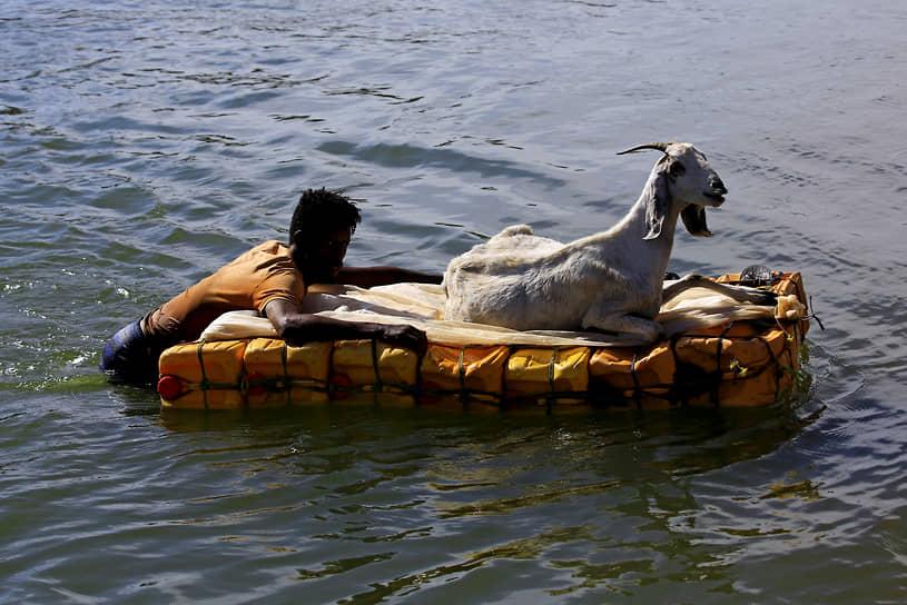 Кассала, Судан. Беженец сплавляется по реке вместе с козой