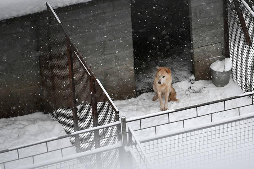 Заметенный снегопадом приют для собак