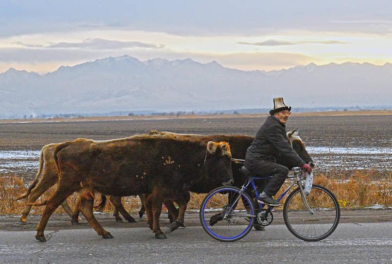Киргизия. Пастух едет на велосипеде в районе границы с Казахстаном