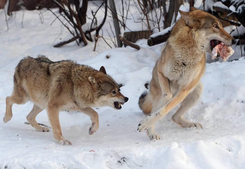 Москва. Волки в зоопарке