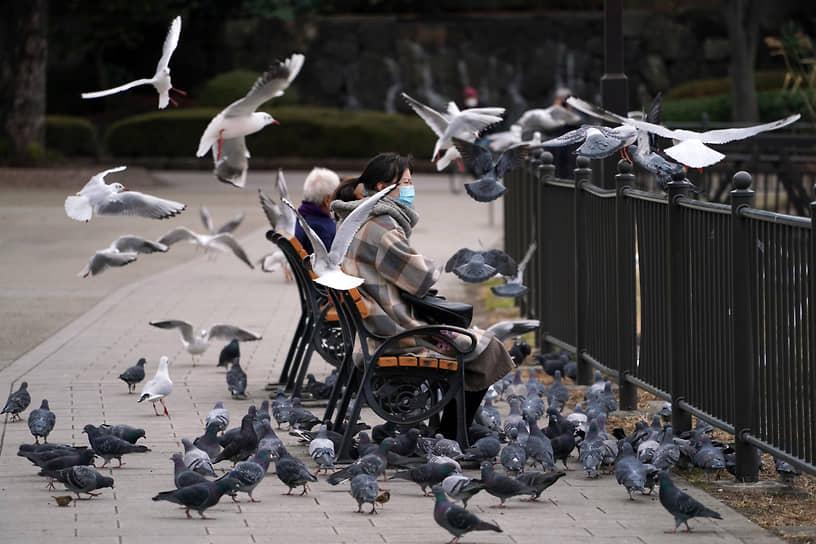 Токио, Япония. Голуби и чайки летают рядом с отдыхающими в парке