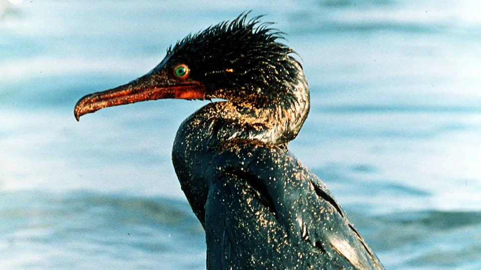 Птицы — традиционные жертвы нефтяных загрязнений