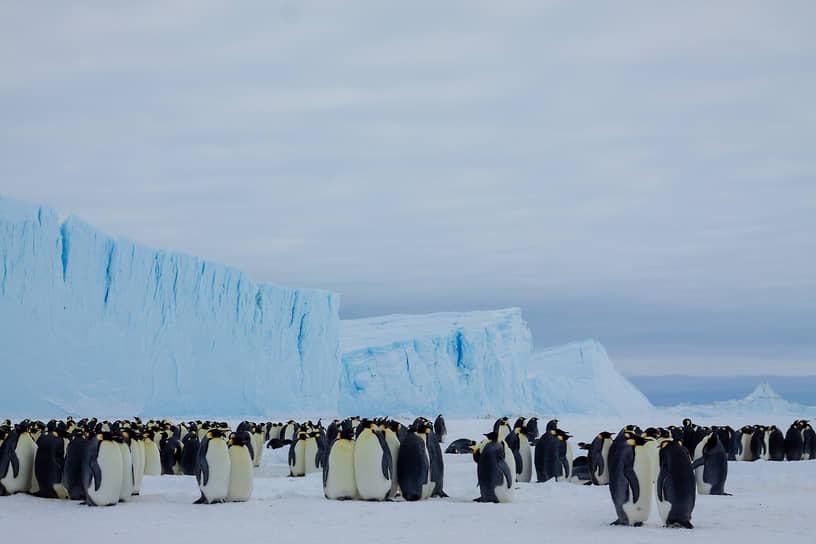 На сотрудников станции также возложена задача ведения наблюдений за ледовой обстановкой для определения возможности передвижения в этой зоне исследовательских кораблей
