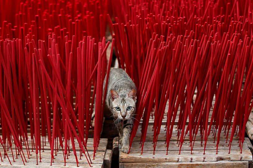 Тангеранг, Индонезия. Кошка ходит рядом с ароматическими палочками с ладаном