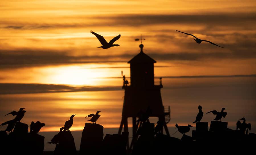 Саут-Шилдс, Великобритания. Птицы на фоне маяка
