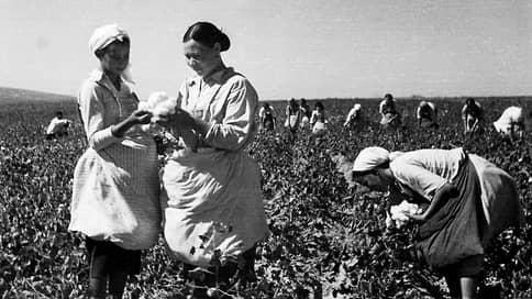 Может явиться источником огромного богатства // Какая культура подготовила почву для кукурузной лихорадки