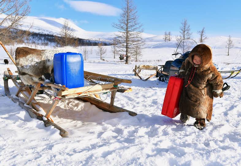 Запряженные оленями нарты являются традиционным транспортным средством на Полярном Урале, но в последние десятилетия здесь стали доступны и снегоходы