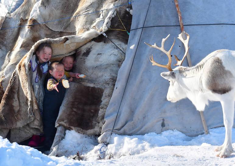 Чум – традиционное жилище северных оленеводов – ненцев, хантов, коми и энцев. В этом живет семья Ледковых: Виталий Ледков, его жена Татьяна и трое детей