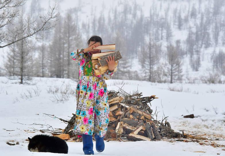 Жена оленевода Татьяна Ледкова с охапкой дров