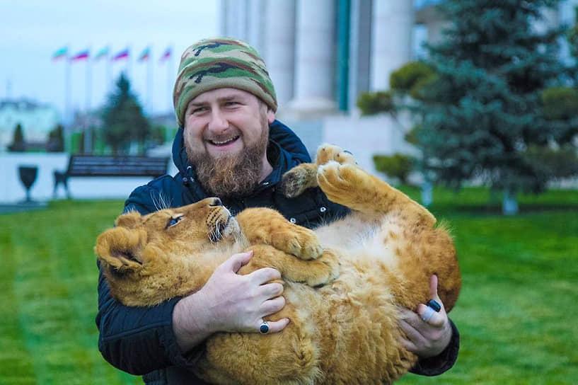 Львы и тигры начинают заниматься с полугодовалого возраста. Они постепенно привыкают к манежу<br> На фото: глава Чечни Рамзан Кадыров, 2016 год