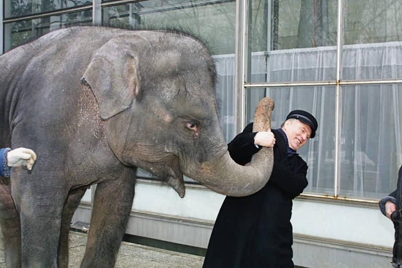 Слон — самое крупное и опасное животное на цирковой арене. По статистике, больше всего дрессировщиков и ветеринаров гибнут от их ног и бивней <br> На фото: лидер ЛДПР Владимир Жириновский, 2003 год