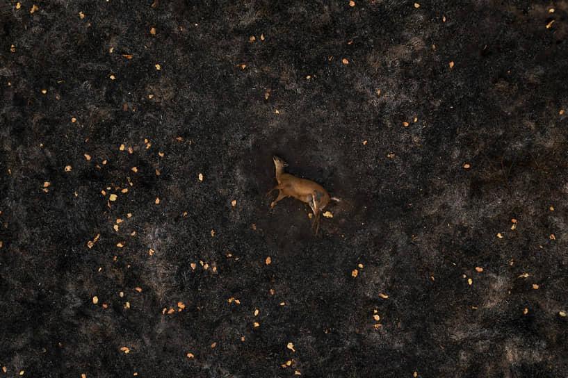 Серия кадров Лало де Алмеиды о лесных пожарах в Бразилии стала лучшей фотоисторией в категории «Природа»