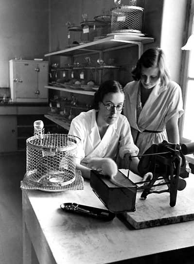 Всемирный день защиты лабораторных животных был учрежден в 1979 году международной Ассоциацией против болезненных экспериментов на животных и Национальным обществом против вивисекции