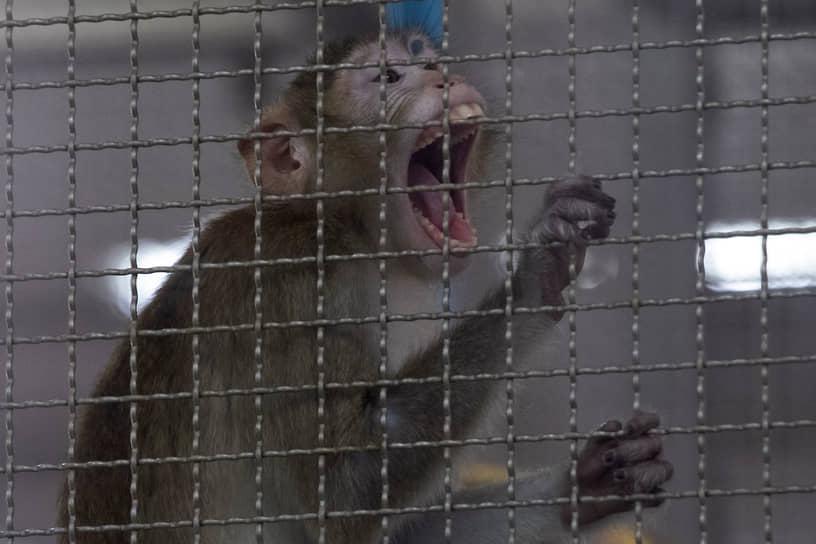 Швеция, Великобритания, Дания, Нидерланды, Австрия и Швейцария возглавляют рейтинг World Animal Protection 2020, оценивающий законодательство и политику в сфере защиты животных. В Швеции, например, проводить исследования можно только на выращенных в лабораторных условиях животных