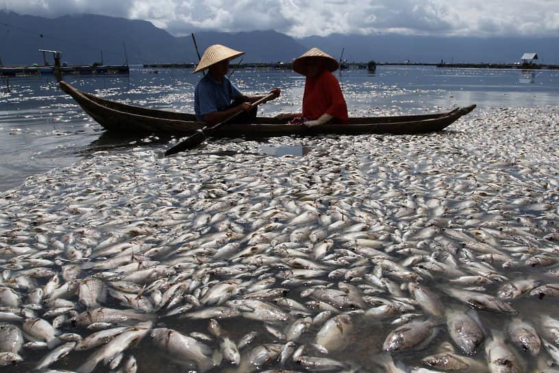 Западная Суматра, Индонезия. Местные жители плывут по озеру среди умерших рыб